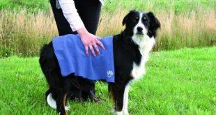Hunde-Handtuch Test