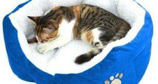Katzenbett Test