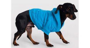 Hunde Hoodie Test