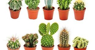 Kaktus Test