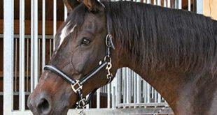 Pferde Halfter Test